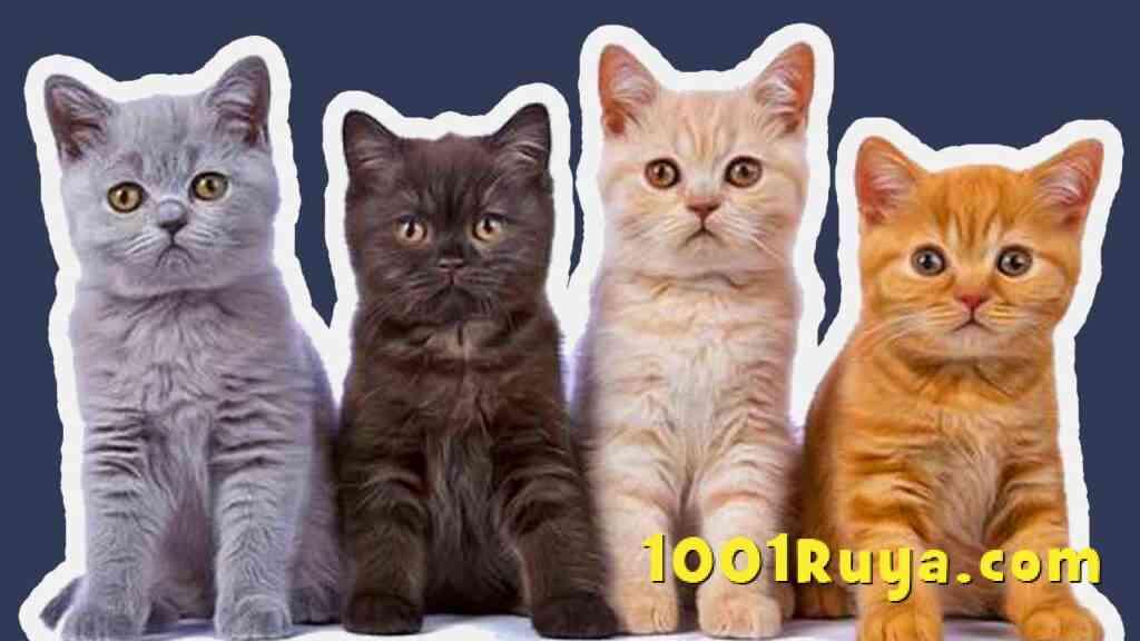 ruyada kedi gormek-ruyada yavru kedi gormek-kedi sevmek-1001ruya